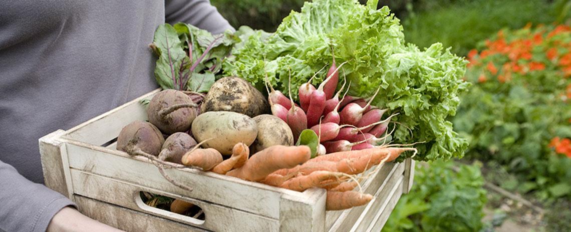 5 alimentos para prevenir el cáncer