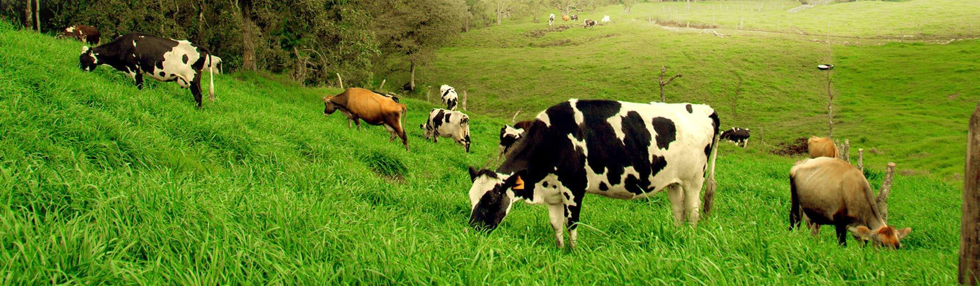 leche colanta leche en colombia comprar leche entera deslactosada descremada